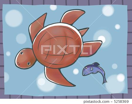 图库插图: 海龟 乌龟 可爱