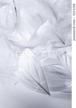 照片素材(图片): 白色的羽毛 光炮 羽毛