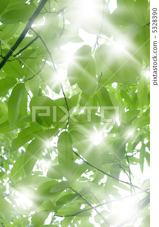 图库照片: 日光 阳光 太阳光