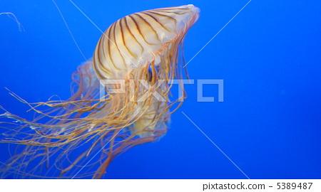 水母 水生生物