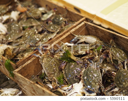 图库照片: 梭子蟹 甲壳动物 螃蟹