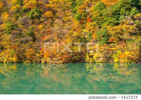 红枫山水动态图片