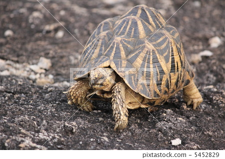 照片: 乌龟 一只动物 动物
