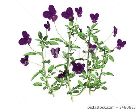 紫罗兰 首页 插图 姿势_表情_动作 表情 可爱 紫罗兰  *pixta限定素材