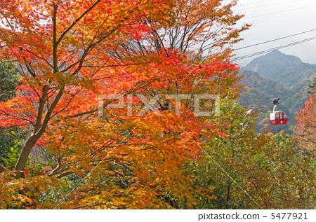 枫树 红枫 秋天颜色