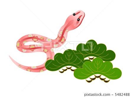 爬行动物_两栖类 蛇 大毒蛇 蛇 松树  *pixta限定素材仅在pixta网站