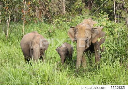 图库照片: 父母身份 父母和小孩 动物