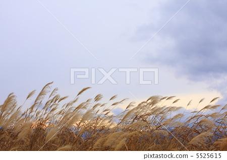 秋 天空 首页 照片 风景_自然 季节 秋 秋天 秋 天空  *pixta限定素材