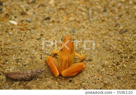 爬行动物_昆虫_恐龙 青蛙 照片 青蛙 橙色 橙子 首页 照片 爬行动物
