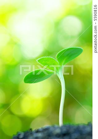 照片素材(图片): 下种 播种 蓓蕾