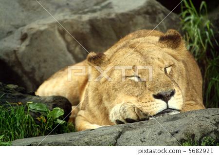 动物宝宝 动物 睡觉