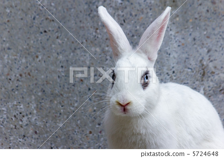 白兔子 漂亮 可爱_表情大全