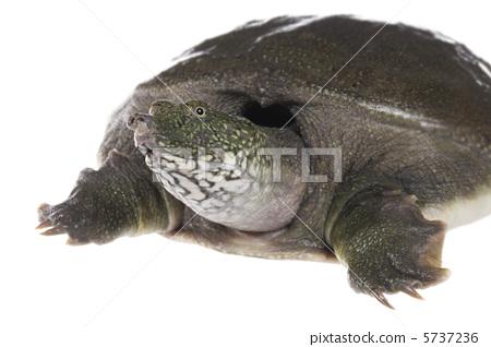 乌龟 白色背景-图库照片