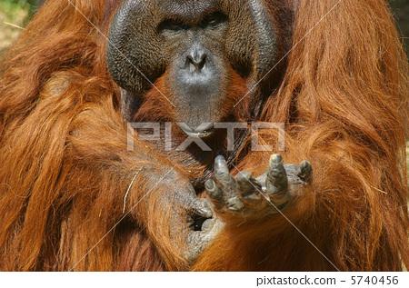 狒狒 动物群 一只动物