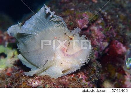 图库照片: 纸鱼 叶鱼 海底世界