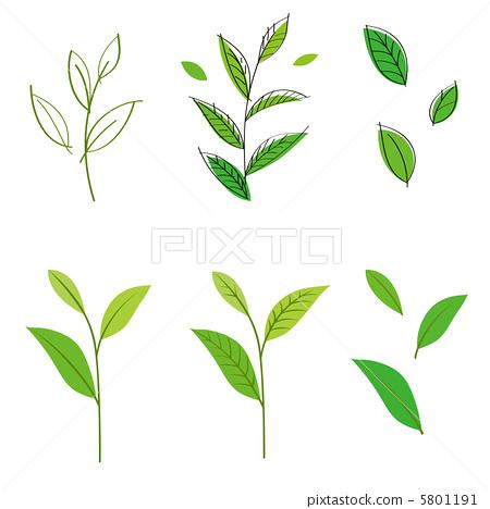 叶子 树叶 白色背景-图库插图 [5801191] - pixta