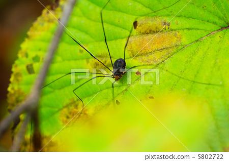 昆虫 节肢动物 野生动物