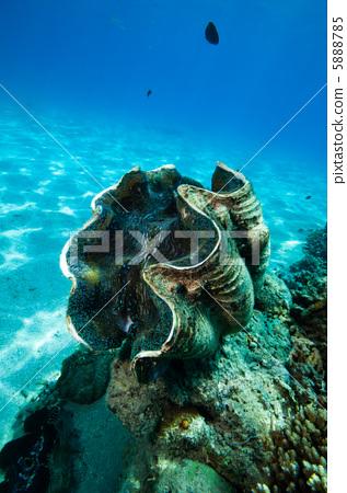 壁纸 海底 海底世界 海洋馆 水族馆 桌面 317_450 竖版 竖屏 手机