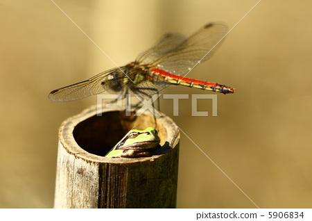 可爱好看昆虫实物图