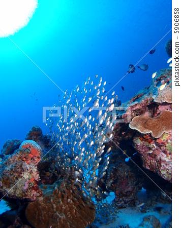 壁纸 海底 海底世界 海洋馆 水族馆 桌面 356_450 竖版 竖屏 手机