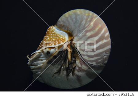 壁纸 动物 海底 昆虫 软体 桌面 450_316