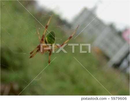 蜘蛛 云彩 节肢动物