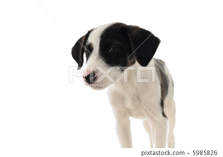 狗 站立 动物宝宝