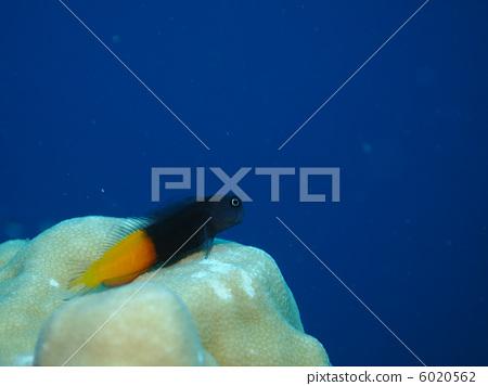 壁纸 动物 海底 海底世界 海洋馆 水族馆 鱼 鱼类 450_356
