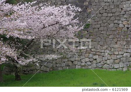 照片: 石垣 樱桃树 石垣市