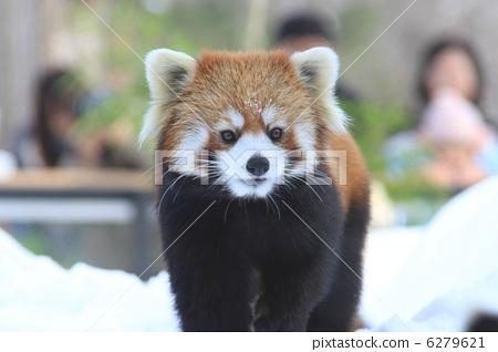 可爱小动物相亲相爱各种萌图