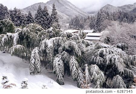 下雪的 冬天景色 随风飘飞-图库照片