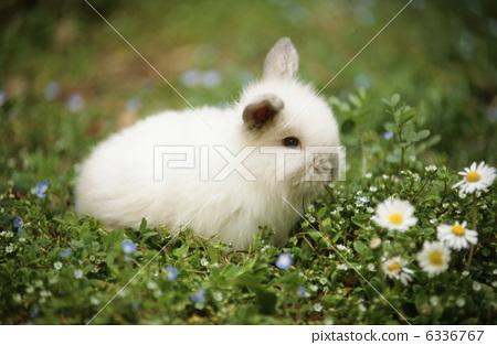 一个鸡蛋 动物宝宝 迷你兔