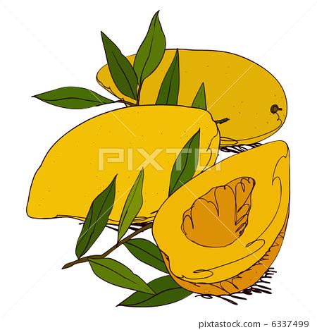 水果 芒果 图标