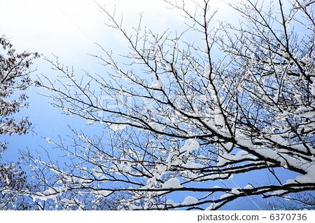 图库照片: 分支 树枝 可爱