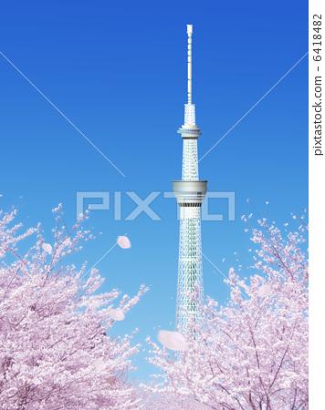 樱桃树 樱花 东京晴空塔