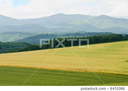 田地 原野 农村地区