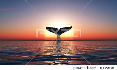 插图素材: 鲸鱼 尾鳍 日照