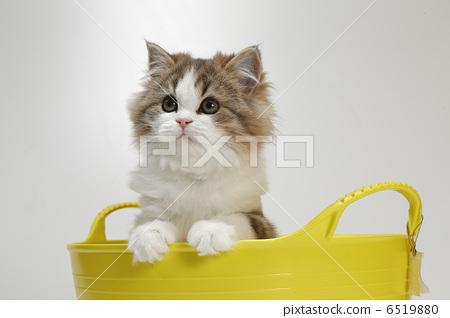 动物_鸟儿 猫 小猫 照片 小猫 小动物 猫 首页 照片 动物_鸟儿 猫