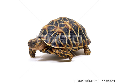 乌龟 宠物 爬行动物