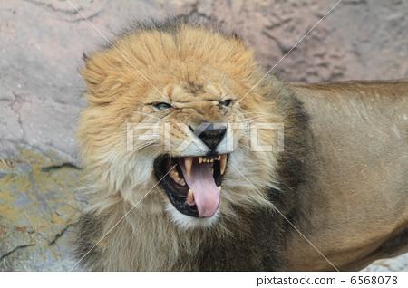 尖牙巨型动物图片