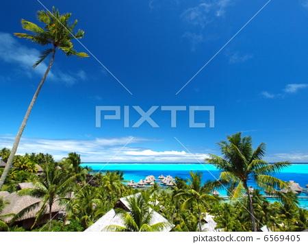 塔希提岛 椰子树 博拉博拉岛