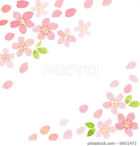 水彩画 樱花 春