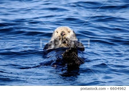 海中最厉害的动物
