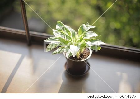 室内盆栽 观叶植物 活力