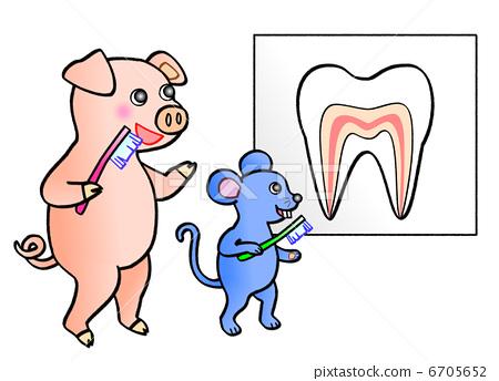 动物 防止蛀牙 预防牙齿疾病