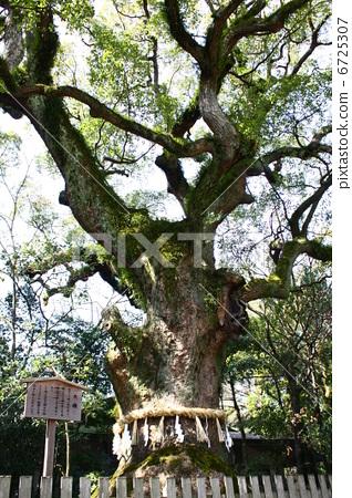 壁纸 树 榕树 318_450 竖版 竖屏 手机