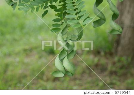 常绿树和落叶树