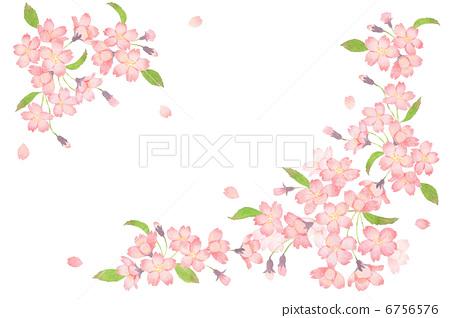 樱花 樱桃树 诱骗