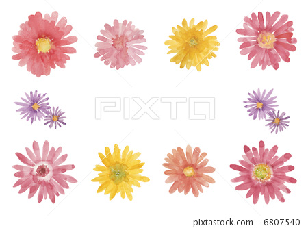 插图素材: 非洲菊 花朵 花