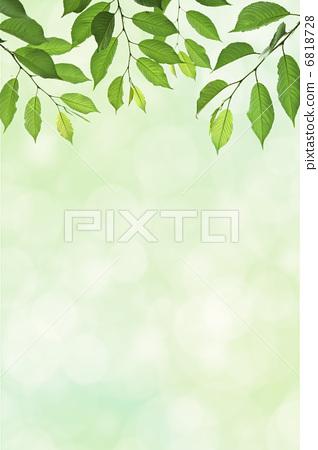 照片: 树叶 翠绿 银杏叶